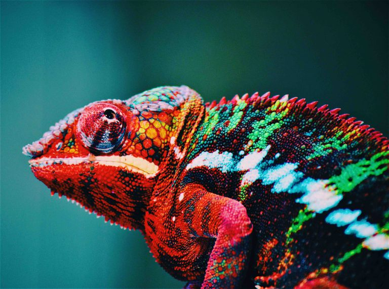 A great leader can also be a chameleon and change their spots to whatever they need in the moment. Being a project management leader in uncertain times means you have to recognize change.